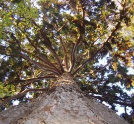 arbres vaucresson (4)_l'arbre
